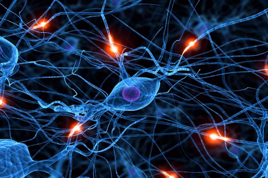 data mining reseau neuronal