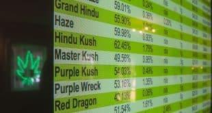 cannabis et big data