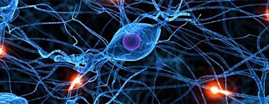 deep learning neurones