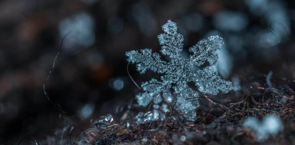 snowflake clientèle