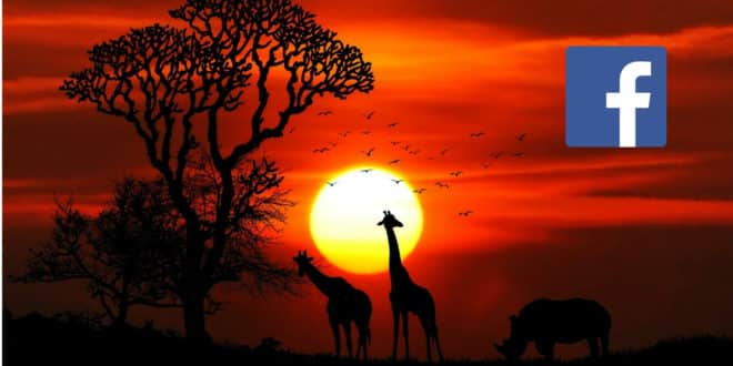 facebook afrique cartographie ia