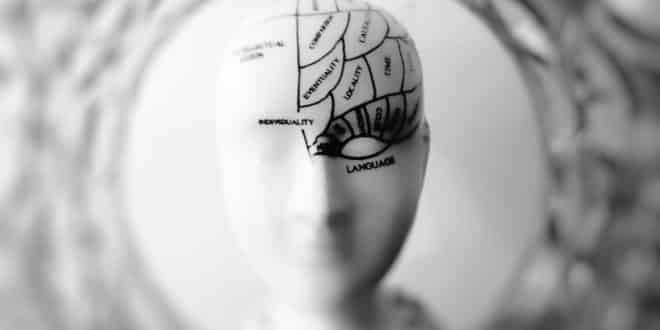 ia cerveau humain