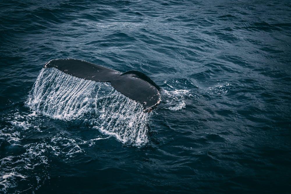baleine big data