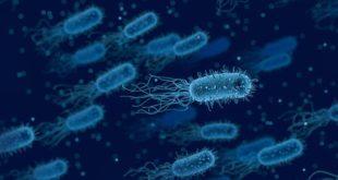 mit ia bactérie antibiotique
