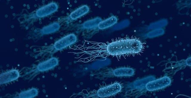 L'IA du MIT crée un antibiotique efficace contre les superbactéries - LeBigData.fr