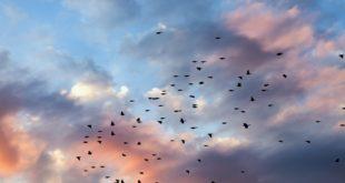 migration cloud entreprises